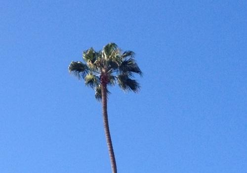 Palm3